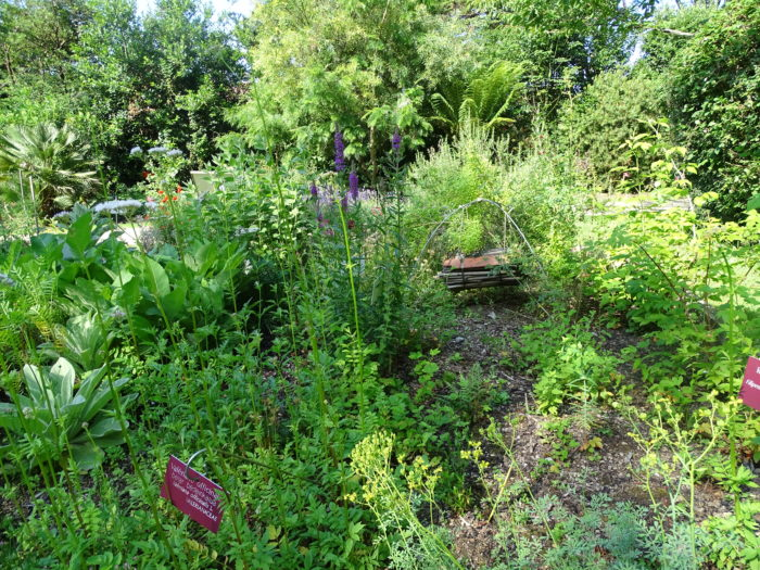 Jardin Botanique (2)