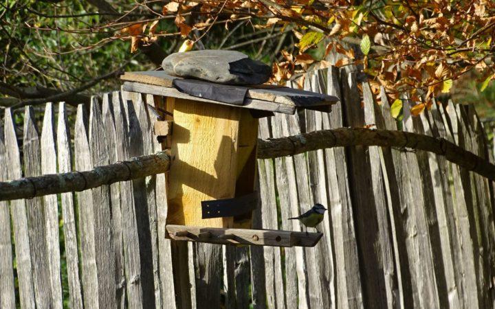 Atelier Nourrissage Oiseaux Hiver 03 10 2020
